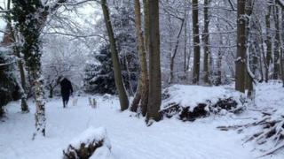 Snowy woods in Norwich