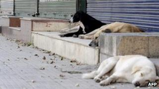 Group of stay dogs lying in an empty street