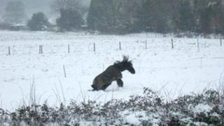A horse enjoying the snow in of Forestside near Chichester, West Sussex