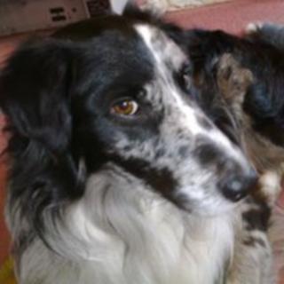 Don Wilson's dog, Max
