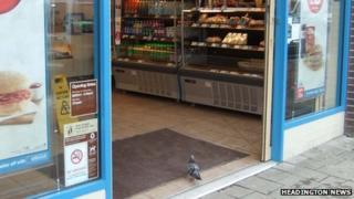 Greggs pigeon