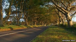Beech Avenue at Kingston Lacy