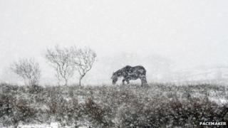 Horse in snowy field