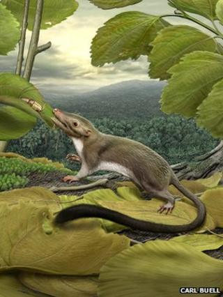 Artist's conception of ancestral mammal