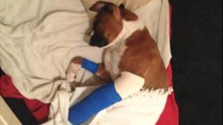 Buster the dog with a broken leg