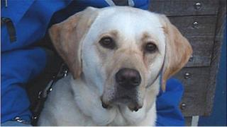 Wag (Pic: The Guide Dogs for the Blind Association)