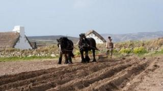 Horse and plough in the Isle of Man- courtesy Manx National Heritage