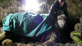 Horse rescue at Pakefield