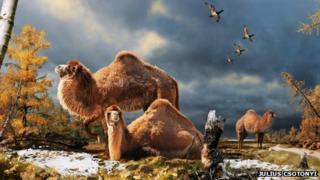 Illustration of Ellesmere camel