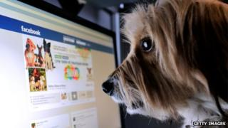 Dog looking at Facebook page