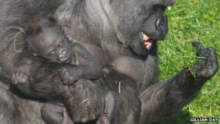 Ozala and her baby gorilla