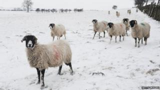 Heavy snow falls over parts of North Yorkshire
