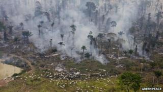 Forest clearance in Sao Felix Do Xingu in Para, Brazil