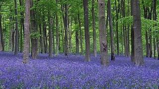 Westwood near Lockeridge, Wiltshire