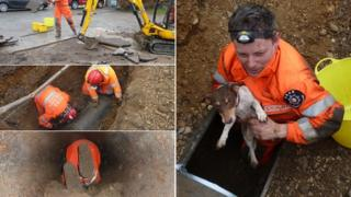 Lulu the dog was saved in a six hour rescue