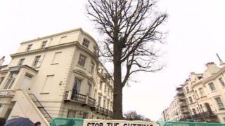 Brighton elm tree