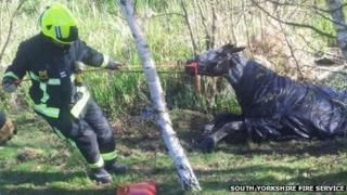 Firefighters rescue a trapped horse