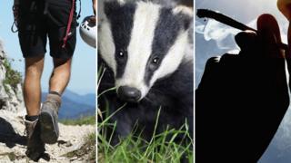 Hiker, badger, man smoking joint