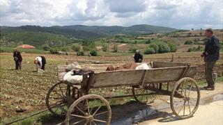 Tobacco growers in Ablonitsa - wide shot