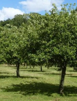 Orchard (Image: BBC)