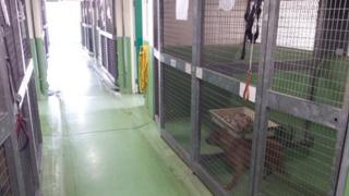 Kennels at Birmingham Dogs' Home