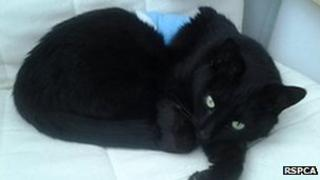 Found Black Cat Paignton