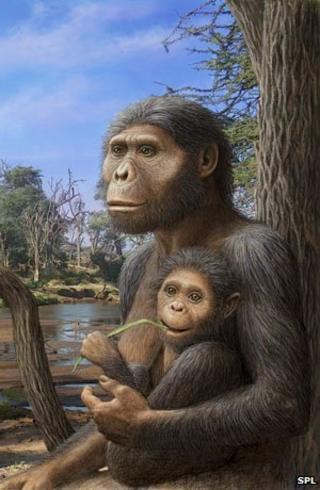 Artists impression of Australopithecus afarensis -
