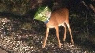 Deer with crisp bag on its head