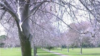 Damage to trees caused by ermine moths