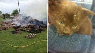 Haystack fire and rescued kitten