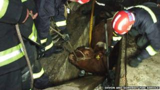 Cow stuck in garage. Pic: Devon and Somerset Fire Service