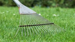 A lawn and rake