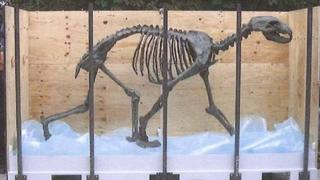 Life-size bronze sculpture of a polar bear skeleton