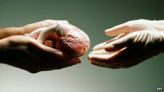 Donating a heart