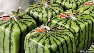 Cubic watermelons, grown in Japan