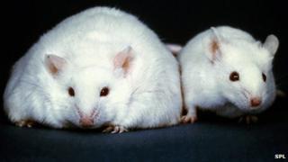 Mutant mice