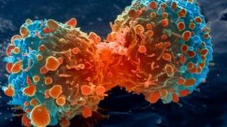 Lung cancer cell dividing