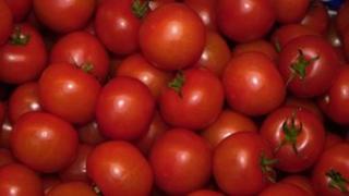 Tomatoes (generic)