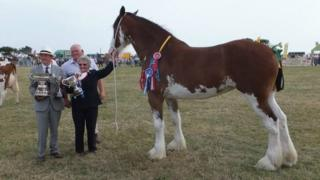 Southern Agricultural Show