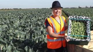 Lady with box of sprouts in field