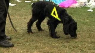 Sniffer dog at V festival