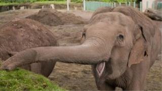 Jenny the elephant