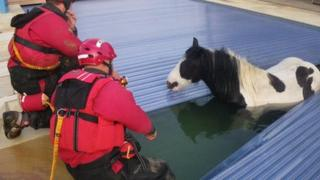 Pony rescued from Sussex swimming pool