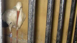 Stalk held in Egyptian prison