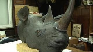 Rhino head at Norwich Castle Museum