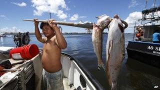 Placido Shim shows two fish he gaffed that were floating past his boat after a leaky pipe caused more than 230,000 gallons of molasses to ooze into the harbour and kill marine life 10 September 2013