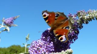 Butterfly lands on a flower with bright blue sky in the background
