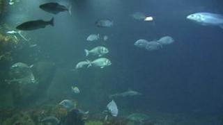 One the marine exhibitions at Exploris