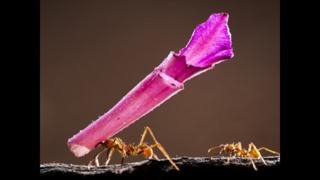 A Giant Trophy for a Small Ant, by Bence Mate