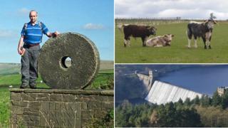 Brian Couzins, cattle, Ladybower
